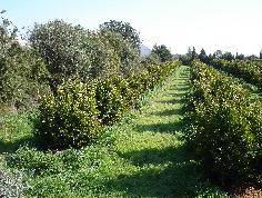 Agricultura cubre con medio millón costes de certificación de 5.000 productores ecológicos