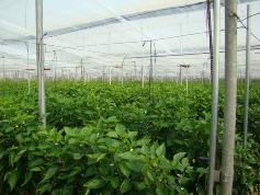 Agricultura mantiene en 2012 el nivel de subvenciones a la contratación de seguros