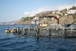 Junta subvencionará los tres primeros años de las Organizaciones de Productores de Pesca