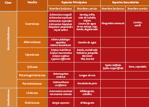 Botánica y ciclo vegetativo II