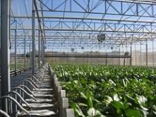 Aguilera denuncia que la suspensión de primas a renovables perjudicará la cogeneración
