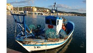 Europa reconoce excepcionalidad de marisqueros que capturan bivalvos en el Mediterráneo