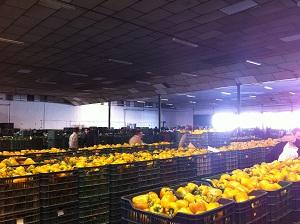 La exportación hortofrutícola de Almería bate un record en volumen durante 2011