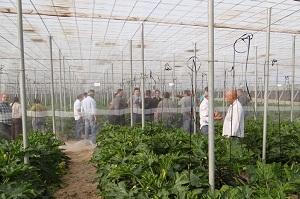 Alternativas naturales a la utilización de fitohormona en el cultivo de calabacín