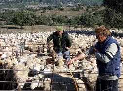 La Junta permite dar alimento convencional al ganado ecológico debido a la sequía
