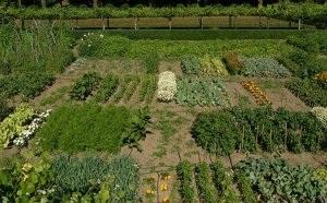 Almería produce 36,6 millones de kilos de 'las otras' verduras