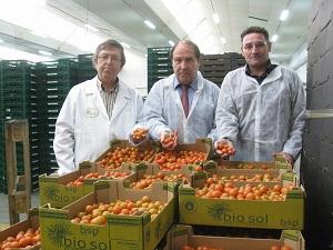 El 50% de las hortalizas que ha exportado España en los dos primeros meses del año han salido de Almería