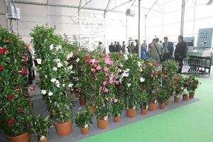 El valor de las exportaciones almerienses de plantas ornamentales y flores crece un 12% entre enero y julio