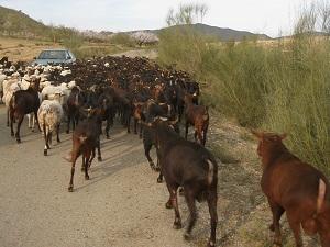 6.000 agricultores y ganaderos de Almería han solicitado hasta el momento ayudas directas y agroambientales