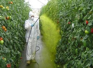UAL e Ifapa evalúan nuevas técnicas de  aplicación de fitosanitarios en invernadero