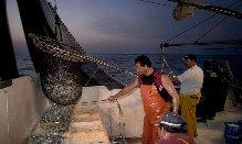 La Junta aprueba una subvención al Puerto de Almería para mejorar la seguridad de la Lonja del Pescado