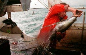 La Junta aplaude la ratificación del acuerdo UE-Mauritania que garantiza la actividad de la flota marisquera andaluza