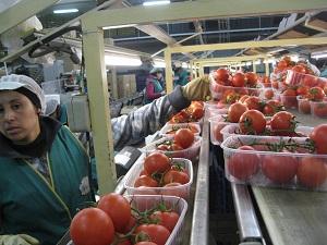 El sector hortofrutícola almeriense encadena ocho meses de incrementos en el valor de las exportaciones