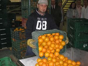 Almería envía mandarinas a Moldavia y Arabia Saudita y limones a Suecia y Rusia