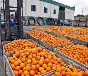 El director general de Producciones y Mercados Agrarios resalta el esfuerzo realizado por el sector citrícola para conseguir una renovación técnica y organizativa