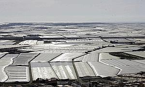 Crece en el último año un 68% la concesión de nuevas licencias para la modernización de invernaderos en El Ejido