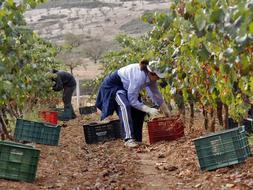Un agricultor español recibe un 69% menos de ayudas PAC que un francés, alemán o británico