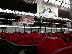 """AgrupaEjido confirma su """"buen comportamiento"""" en cotizaciones de pimiento"""
