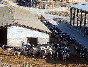 El Consejo General de Organizaciones Interprofesionales Agroalimentarias hace informe favorable sobre las nuevas extensiones de norma del sector lácteo y de la carne de vacuno