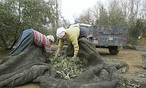 El anticipo de las ayudas de la PAC beneficiará a 42.000 productores granadinos