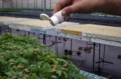 Asaja, Coag, UPA y Faeca firman un manifiesto en favor  para el sector hortícola almeriense