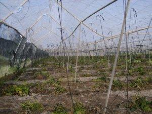 Agricultura suspende temporalmente la línea de ayudas a los seguros agrarios para el año 2012