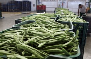 La Junta celebra un curso sobre empresa agraria para la incorporación de jóvenes a la agricultura intensiva