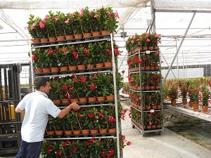 Almería vende en Francia más de la mitad de las plantas vivas, plantones y bulbos que exporta