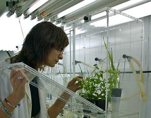 Agricultura refuerza las líneas de investigación con la llegada de nueve expertos