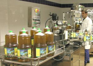 El primer aforo del olivar de Almería prevé una cosecha de aceituna de 51.000 toneladas, similar a la del año pasado