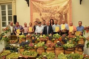 Diputación ayuda a recuperar más de 60 variedades de uva de la provincia de Almería
