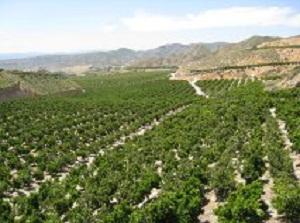 Almería incrementa un 67% el valor de las exportaciones de cítricos entre enero y agosto pasados
