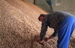 La Junta de Andalucía debe a los productores de almendra de Granada más de 9.000.000 de euros de las campañas 2009 al 2011