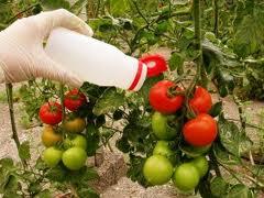 Andalucía recoge el 38,20 % de los envases de produtos fitosanitarios que se generaron en España en 2011