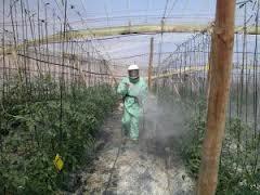 """Jornada de transferencia sobre """"Eficiencia y seguridad en la aplicación de fitosanitarios"""""""