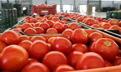Marruecos incrementa un 70% su exportación de tomate a la UE durante la primera semana de noviembre