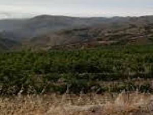 Asaja se opone rotundamente a las pretensiones de la Comisión Europea para reformar el sistema de derechos de plantación