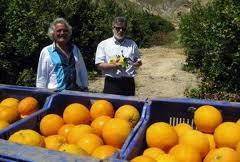 Almería exporta cítricos valorados en más de 19 millones de euros hasta septiembre, un 64% más que en 2011