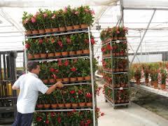 Almería es la tercera exportadora de plantas y flores de España, con 10.750 toneladas hasta septiembre
