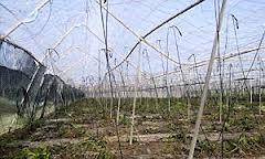 Aprobado el Plan de Seguros Agrarios  Combinados- 2013 con una dotación presupuestaria de 199,2 millones de euros