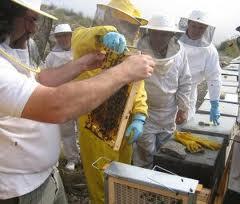 La Junta paga más de 1,3 millones de euros en ayudas a 185 apicultores por su contribución a la conservación de la biodiversidad