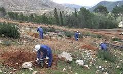 Luis Planas destaca que el Programa de mejora forestal y regeneración ambiental generará cerca de medio millón de jornales