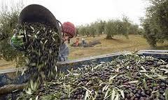 El Ministerio de Agricultura, Alimentación y Medio Ambiente asigna los derechos de la Reserva Nacional de Pago Único solicitados en la campaña 2012