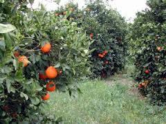 Planas resalta el mantenimiento de los fondos como objetivo principal ante la reforma de la política agraria europea
