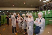 Hortyfruta y Proexport reciben a una nueva delegación de periodistas europeos para conocer de cerca el sector hortofrutícola andaluz