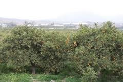 Almería exportó más de 44 millones de kilos de cítricos el  pasado año, un 53% más que en 2011