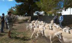 La ganadería extensiva contribuye a prevenir los incendios forestales