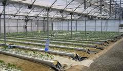 La Junta publica la convocatoria de ayudas para 2013 a las organizaciones interprofesionales agroalimentarias en Andalucía