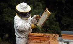 Los apicultores de UPA apoyan la prohibición de los insecticidas neonicotinoides que plantea la UE