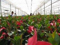 El valor de las exportaciones de planta ornamental y flor  cortada de Almería se incrementa un 33% hasta febrero